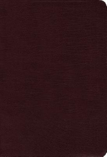 NIV Zondervan Study Bible (Thumb Indexed, Burgundy Bonded Leather)