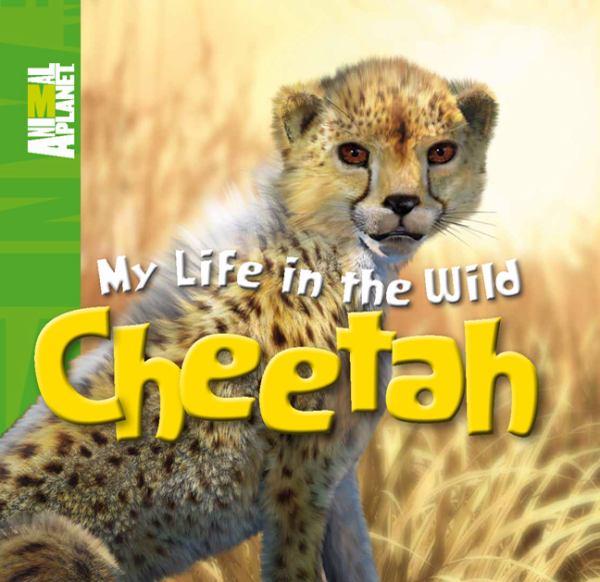 Diagram Of Cheetah Life Cycle - All About Cheetah 2017