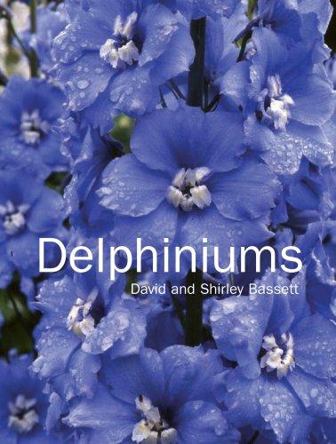 Delphiniums