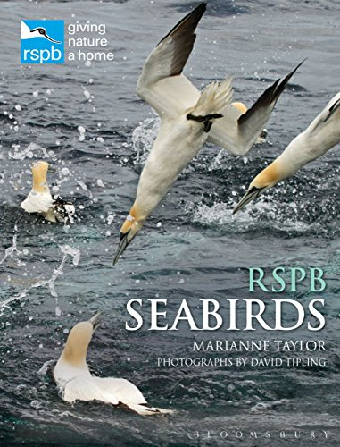 Seabirds (RSPB Spotlight)