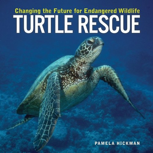 Turtle Rescue: Changing The Future For Endangered Wildlife (Animal Rescue Series)
