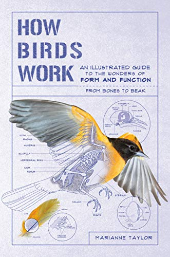 How Birds Work: An Illustrated Guide to the Wonder